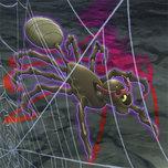 Grand Spider